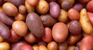 Do You Know How to Store Potatoes to Avoid This?