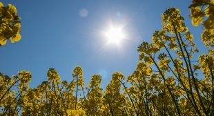 More Sun Is GOOD For You, 16 Reasons to Get More Sun and 4 Safe Ways to Do It