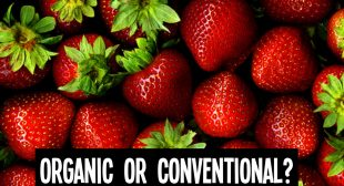 Why You Should Choose Organic Strawberries Over Conventional