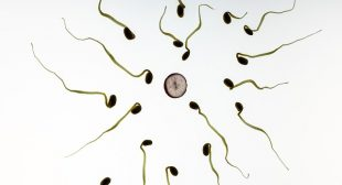 Sperm Counts In Western Men Plunge To Record Lows, Scientists Blame Chemicals In Everyday Products For Crisis