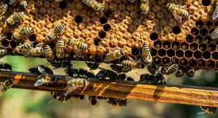 Stressed and Struggling to Sleep? Beeswax Could Help Scientists Say