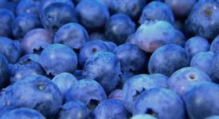 If Blueberries Were Pharmaceuticals, They Would Be Hailed As The Greatest Miracle Health Breakthrough