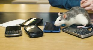Study: Scientists Find 'Clear Evidence' that Phone Radiation Causes Cancer